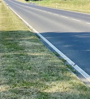 mowed roadside verge