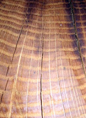 Annual rings, dendrochronology and climate change.