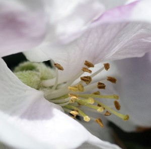 Poor pollination and pesticides