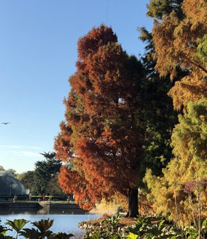 A trip to the Royal Botanic Gardens at Kew