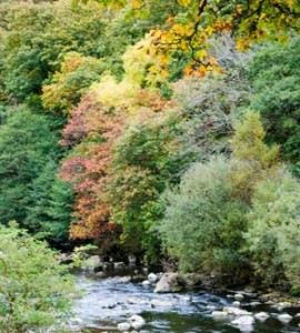 Changing Colours – Why do leaves change colour in the autumn?
