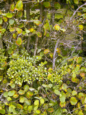 autumnal-hedge
