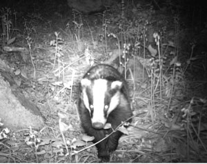 Catching woodland wildlife - on camera