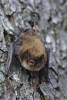 Bats in the Woods - Bat surveys