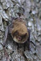 Bats in the Woods - Bat surveys
