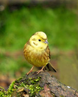Managing Your Woodland For Birds