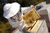 Bee Friendly! - Part 3: Opening the Hive