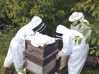 The Case for Beekeeping