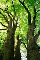 Big Trees, Little Trees - a video presentation with Julian Evans