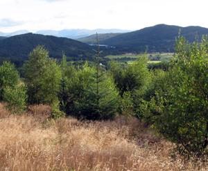 Woodland types : Birch woodlands