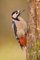 Woodland Bird Photography