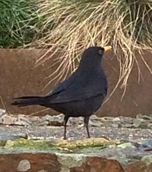 Big Garden Birdwatch 2017
