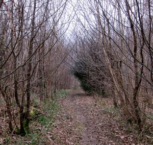 broad path 2