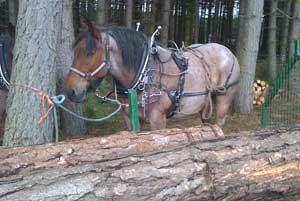Horse-logging - less damaging and more practical for woodland owners