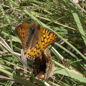 butterfly-dance