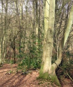 Woodlands and Taxation