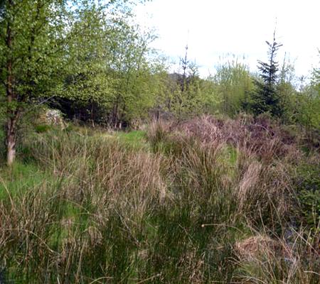 carr woodland