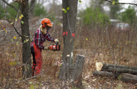 A Video Guide to Tree Felling - Part 2