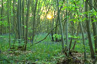 The Ghost of Workers Past Pt 6, Vegetation : Delving into the history hidden in your woodland