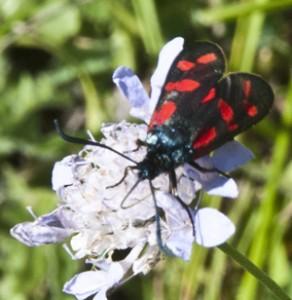 UK wildlife, gaining ground but losing numbers ?