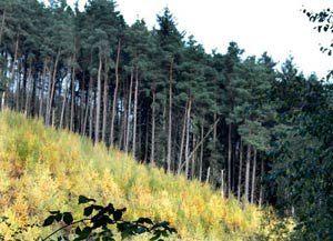 Woodland types : Coniferous plantations