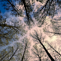 What is Continuous Cover Forestry?
