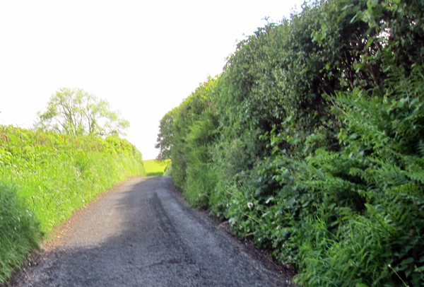 country-lane-and-hedge