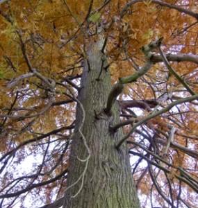 The loss of big trees