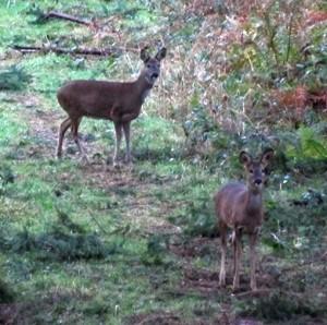 Deer stalking as a serious hobby