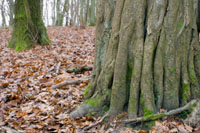 Discovering Long Wood - A year in the life of a small woodland - January