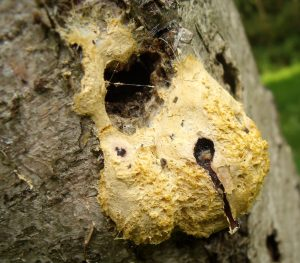 The mysterious world of the Slime Mould