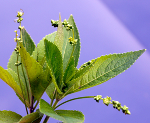 dogs mercury