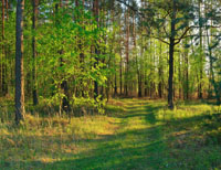 Prize-winning Woodland?  The RFS Excellence in Forestry Awards 2010
