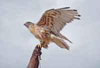 Falconry and Woodlands