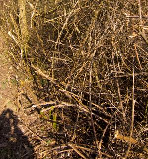 Hedges revisited .......