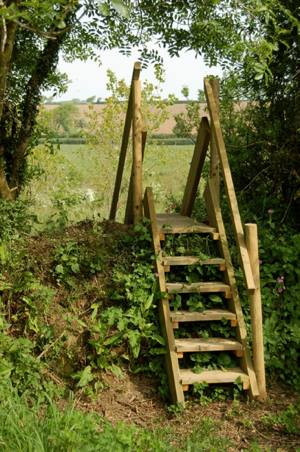 Woodland steps – part 1