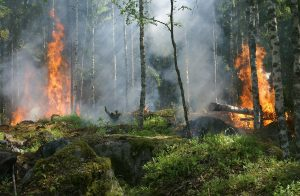 Shellfish, fires and forest productivity