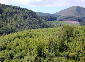 A northern forest