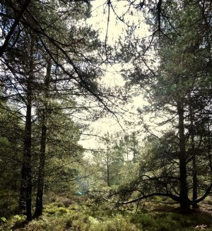 A year in our very own woodland – by MarkVesey