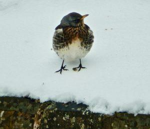 feed the birds .......