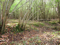 The Ghost of Workers Past Pt 3: Delving into the history hidden in your woodland
