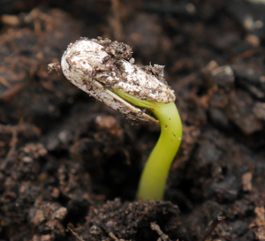Soil seed banks