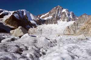 Spruce - an ice age survivor ?