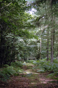 Call for entries for prestigious Small Woodlands award in the South West