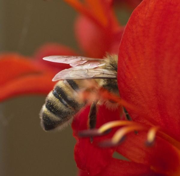 half a bee