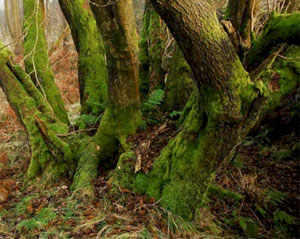 Moss Mites in woodlands.