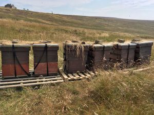 hives-on-the-moor