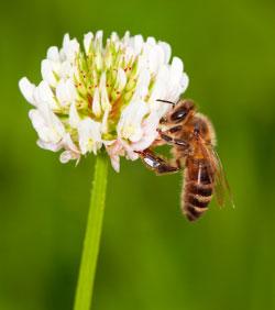 Bees, again.........