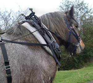 Powys Forest Horses
