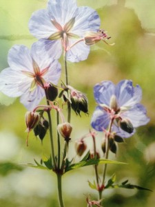 Planting wild flowers in your woodland